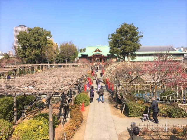 亀戸天神の梅の開花状況/2018年2月17日