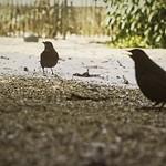 20180302-134053 - Vögel im Garten