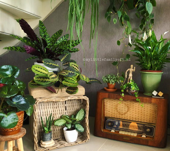 Vintage radio in een plantenhoek