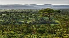 Classic Serengeti