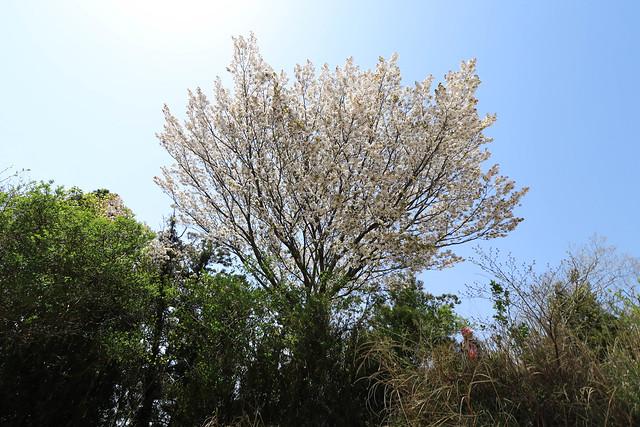 20170415_鎌倉アルプス_0272.jpg