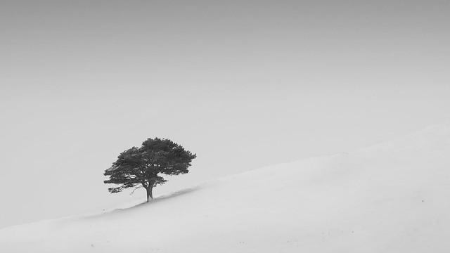 Caledonian winter