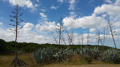Autor: aconcagua2012