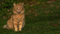 Más gatos - D'autres chats
