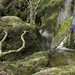 Beck; Branch (Easegill, Yorkshire Dales National Park, Cumbria, UK)