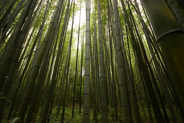 嵐山竹林 - Arashiyama Bamboo Grove, Nikon D5300, Sigma 10-20mm F4-5.6 EX DC HSM