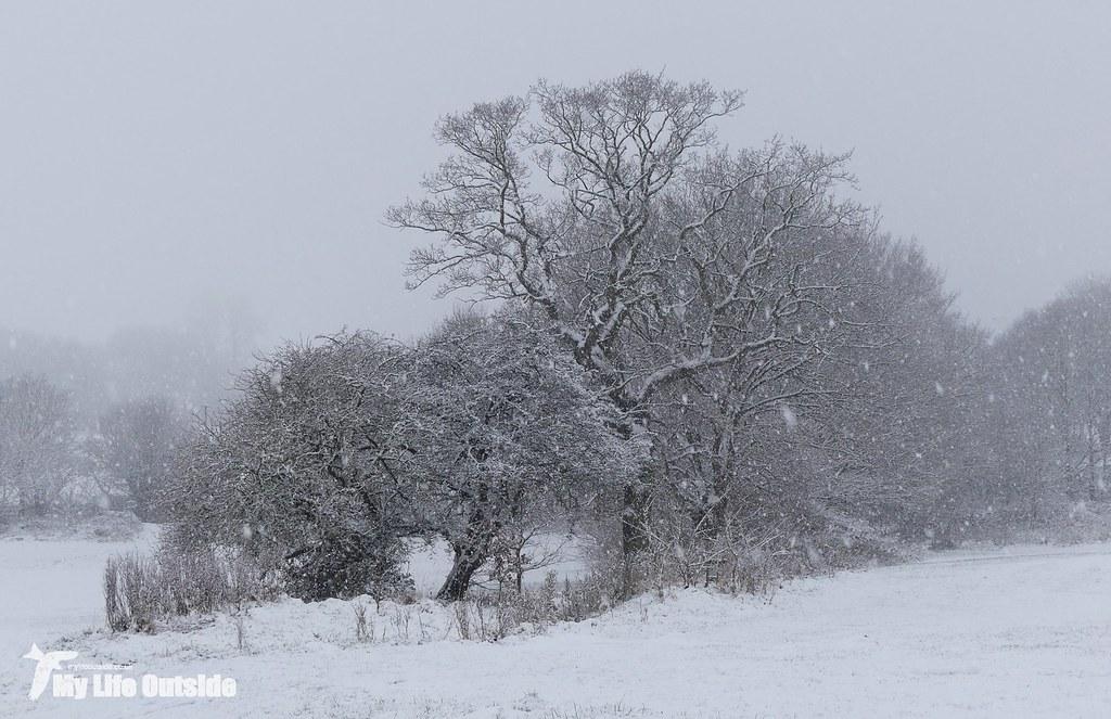 P1130188 - December Snow in Leeds
