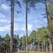 Tall trees Formby_SP26201
