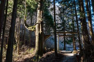 腰掛け杉と奥の院への鳥居