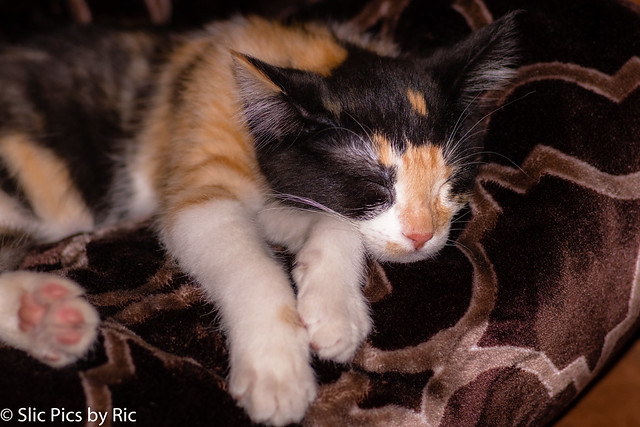 Annie sleeping #1