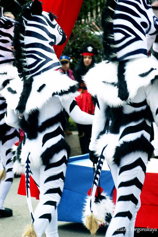 Зебры на шествии