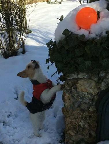 Helwen dans la neige