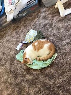 Buttercup dead sound asleep laying on top of my Scraps of Fabric in my Sewing Room - 7 Months Old - Thursday Feb 15, 2018