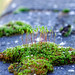 Moss and stemss moss