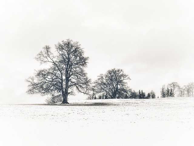 a winter in name only