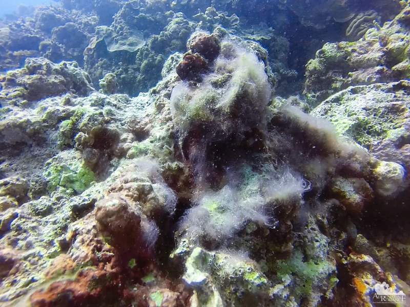 This is what a dead coral looks like