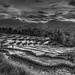 Rice fields by robby92+