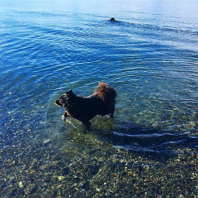 Maggie and Bear Cub swim year-round. 💦