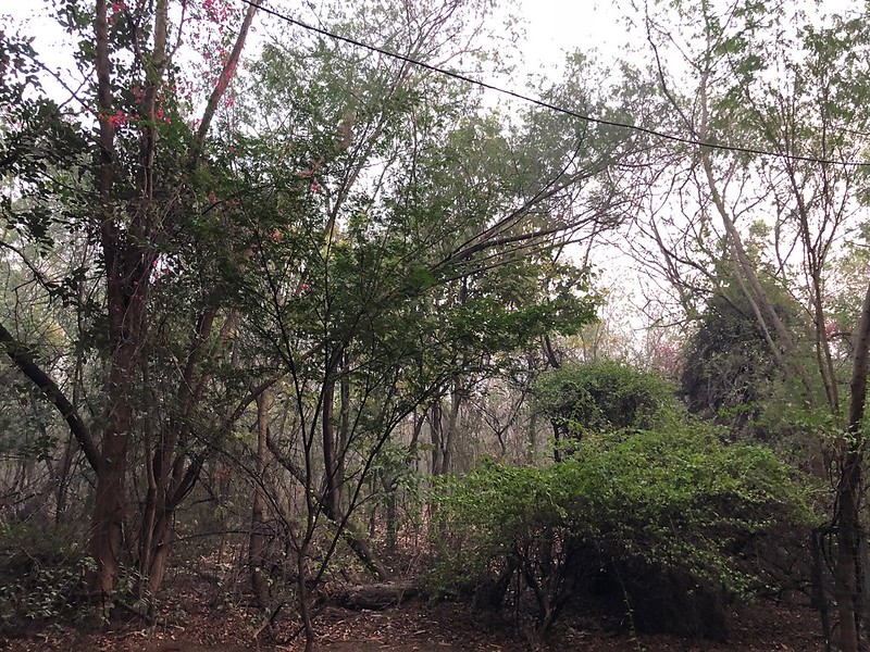 City Walk - Jahanpanah City Forest, South Delhi