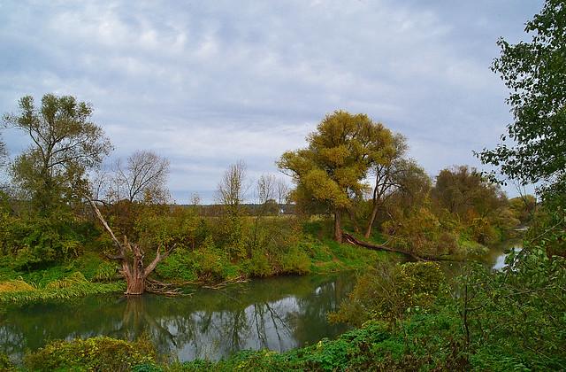 Stump in the river