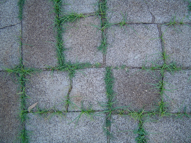 Bricks - 2007, Sony DSC-P72