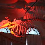 OCEANOGRAPHIC MUSEUM, MONACO 127