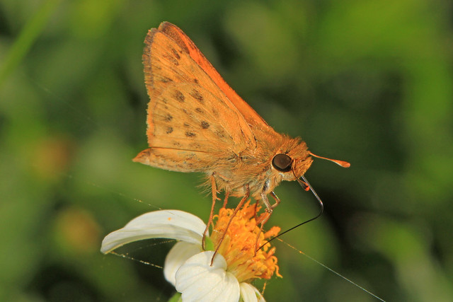 Judy Gallagher