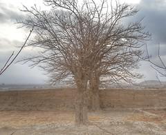 #Nature #dry #land #dryland #sunset #desert #mountain #quetta #clouds