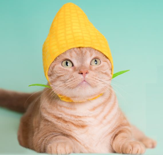 看起來可口又可愛~♥奇譚俱樂部【可愛貓咪頭套。野菜貓】貓星人專屬轉蛋 第17彈!!かわいい かわいい ねこ野菜ちゃん