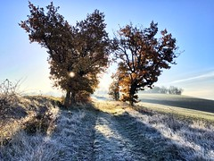 Petite balade matinale #walk #walking #trees #nature #sun #sunshine #sunrise #shine #frozen #freeze #field