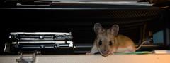 mouse gang • Mausebande!