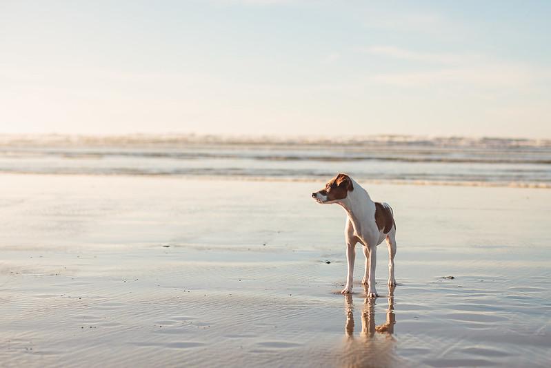 January Beach-7864