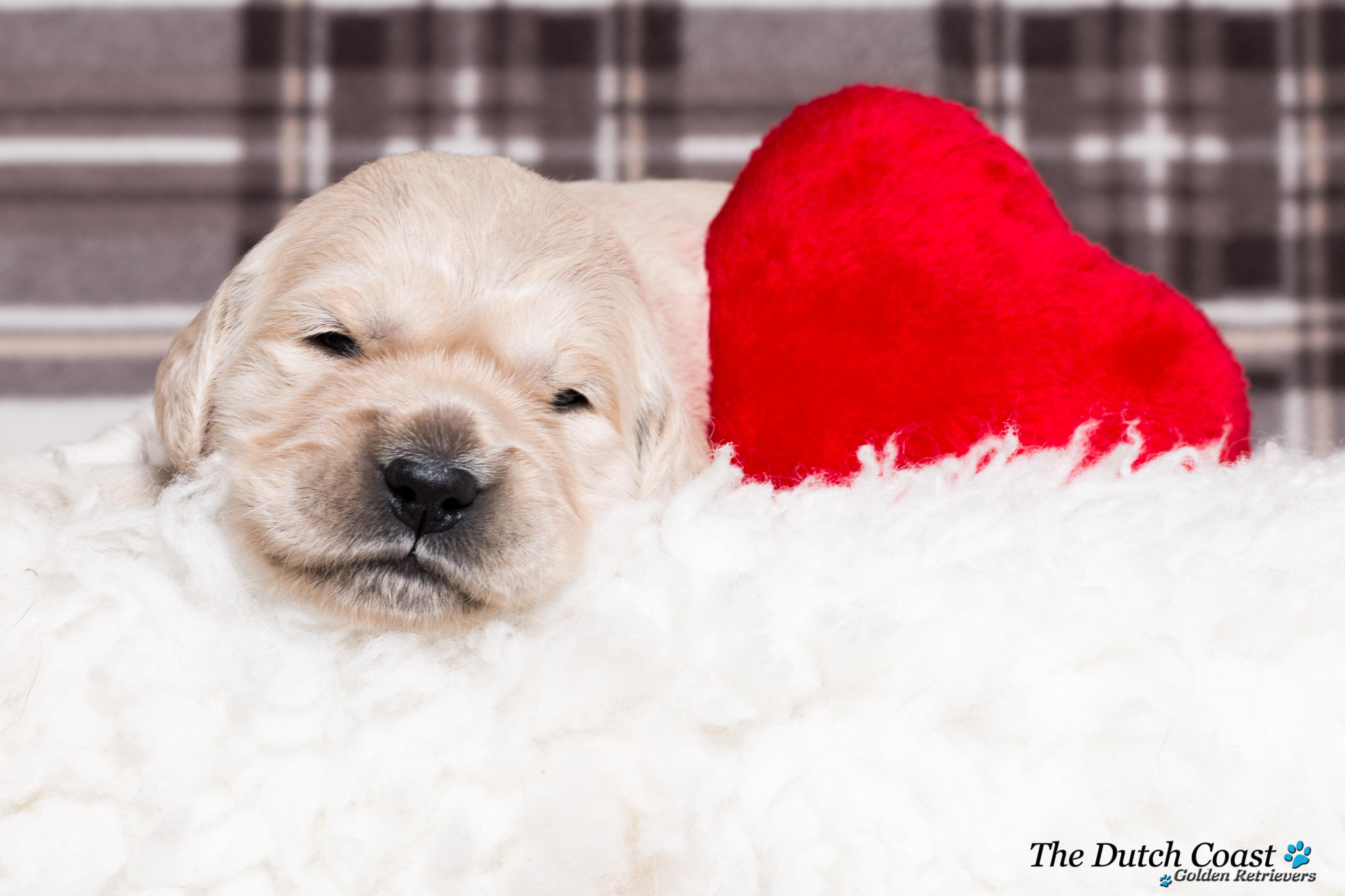 Fotoshoot met puppy groen