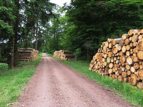 20170605 07 196 Regia Wald Holzstämme