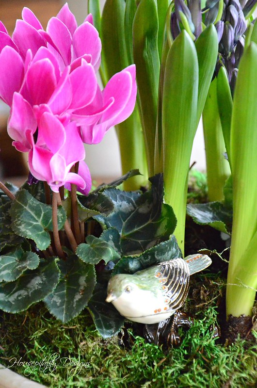 Dish Garden-Housepitality Designs-2