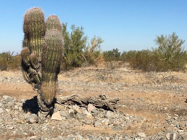 Cactus @ RTR