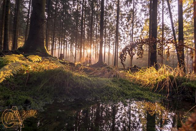 Wald der Magie