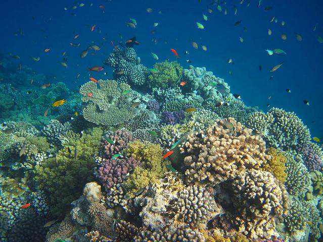 Lahami Bay, coral reef