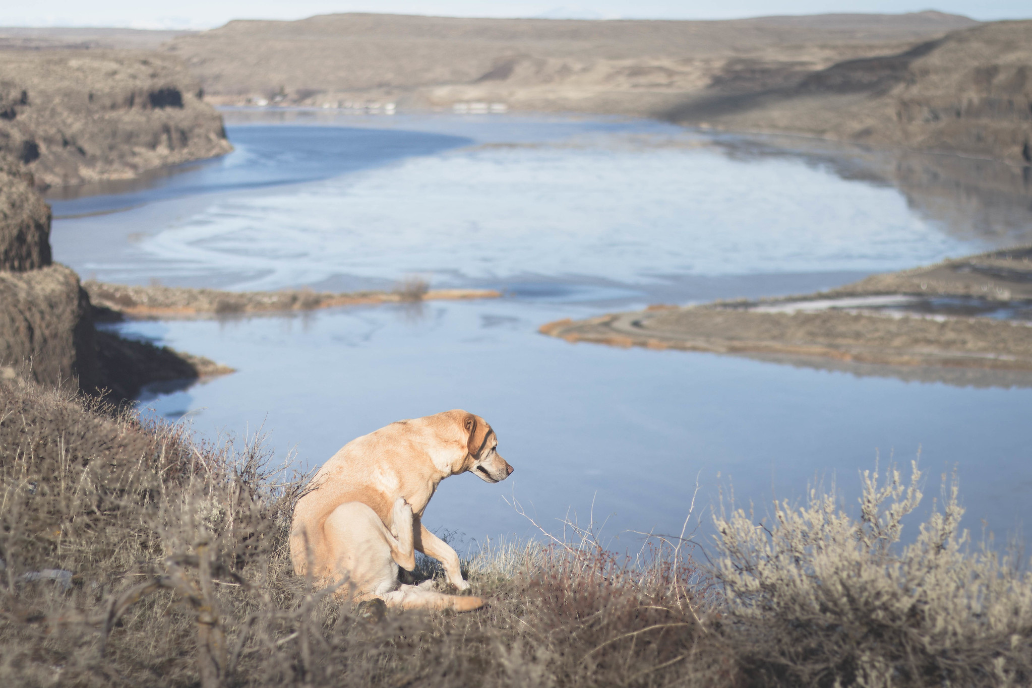 Desert dogs in Moses Coulee Preserve