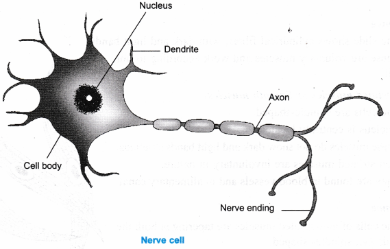 ncert-class-9-science-lab-manual-plant-and-animal-tissues-9