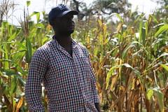 Abdul Rahman Nurudeen (IITA), Africa RISING research officer (Photo credit: IITA / Jonathan Odhong).