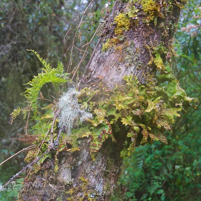 plants 0002 balneario Tambo, Papallacta, Ecuador