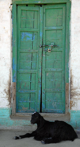 Green door with goat in a village in India