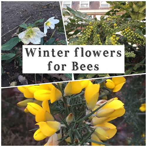 Winter flowers for bees