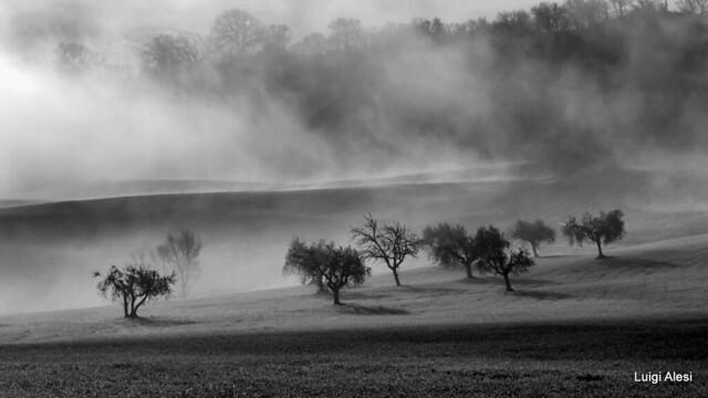 foggy countryside - San Severino Marche