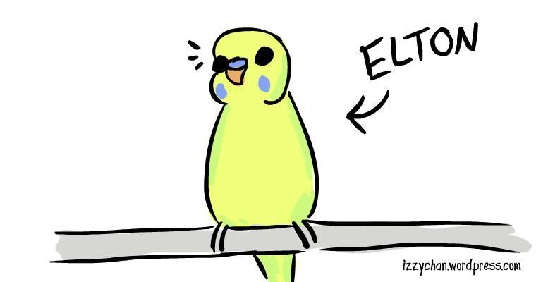 elton yellow budgie adoption