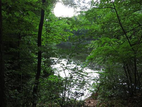 20140804 02 096 Jakobus Wald See Bäume