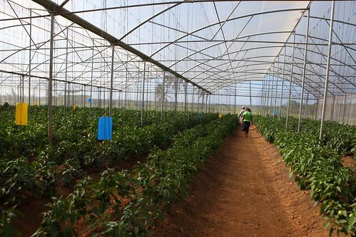 Diversificación de la producción local