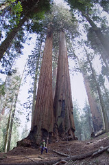 io al Sequoia National Park