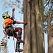 Tree Access Arborist